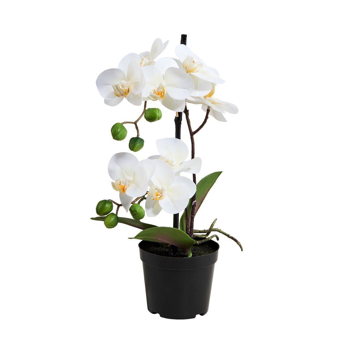 BUTLERS FLORISTA »Orchidee im Topf 35 cm«