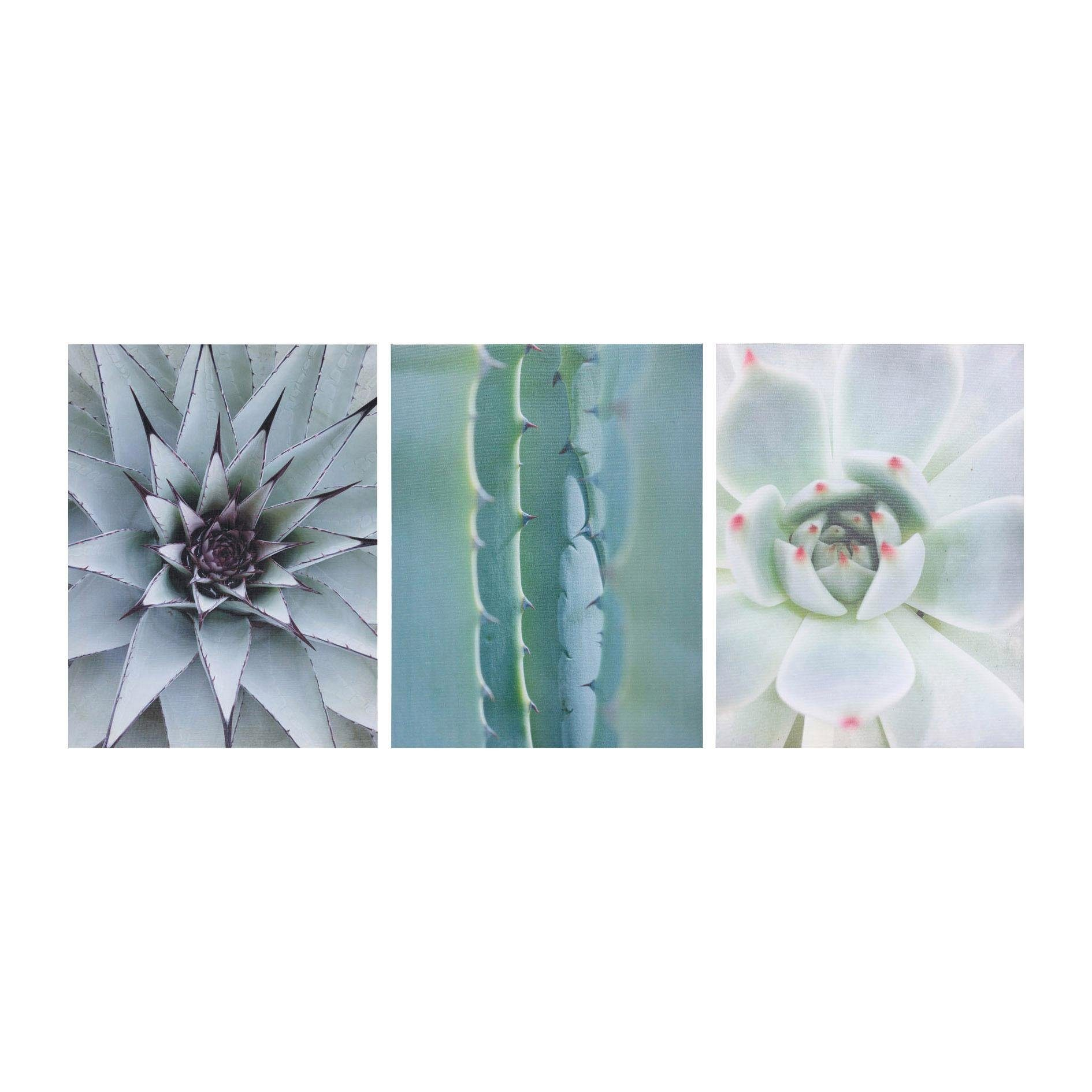 Canvas Dekobild »CACTUS« (3er Set)