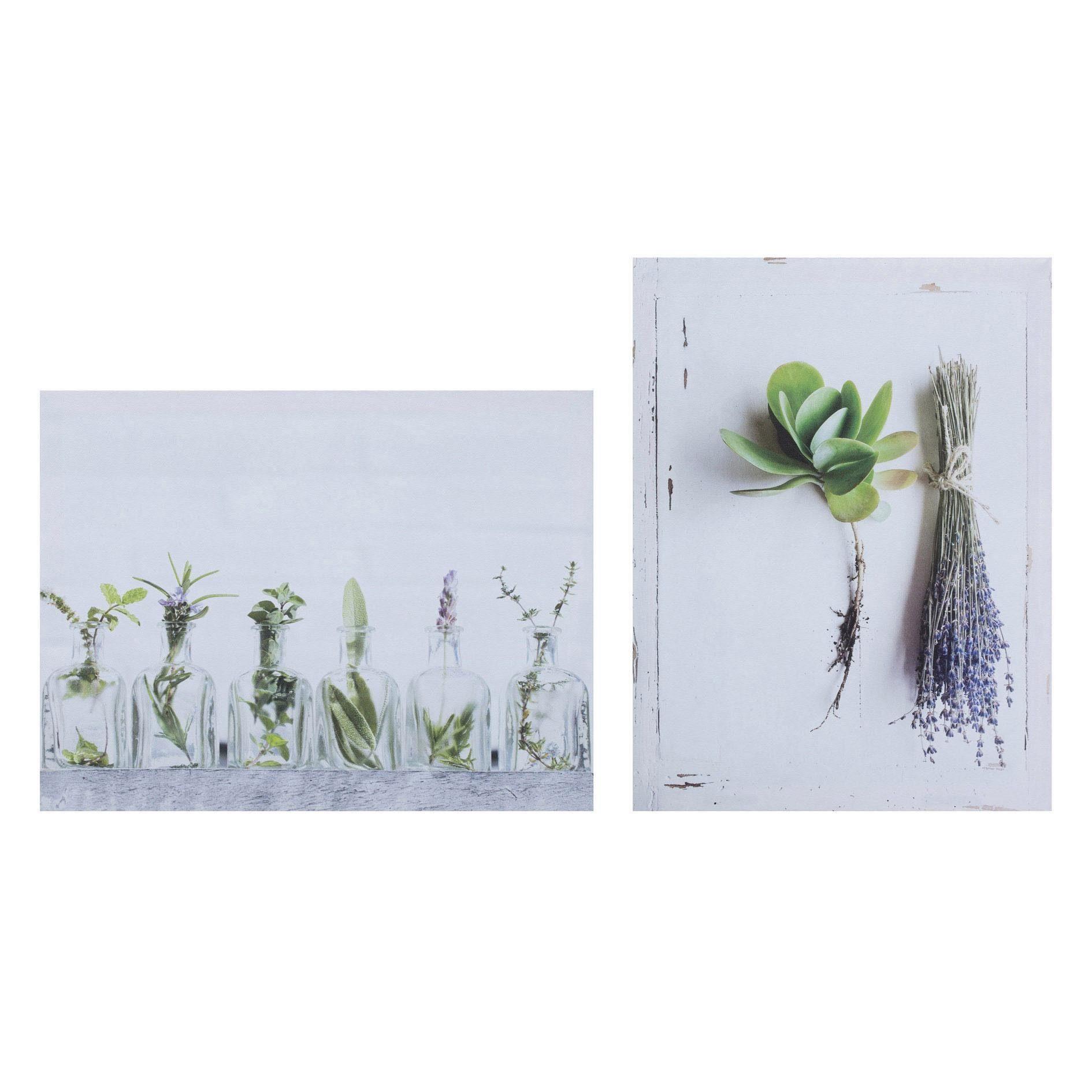 Leinwandbild »HERBS«, Blume (Set), 2er Set