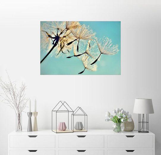 Posterlounge Wandbild - Julia Delgado »Pusteblume Flying high«