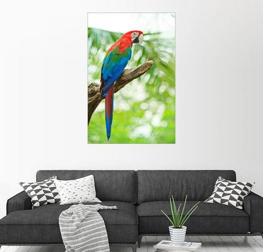 Posterlounge Wandbild »Tropischer Papagei«