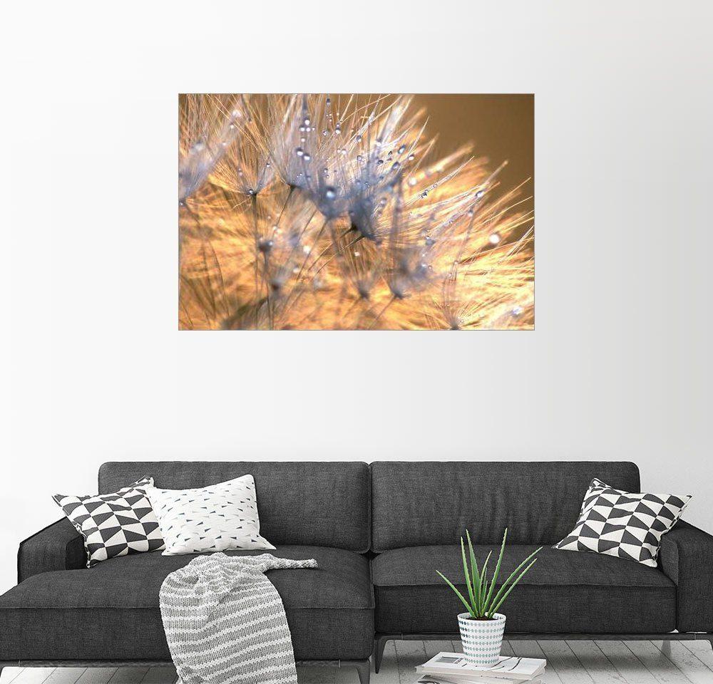 Posterlounge Wandbild - Julia Delgado »Pusteblumen Magic Light«