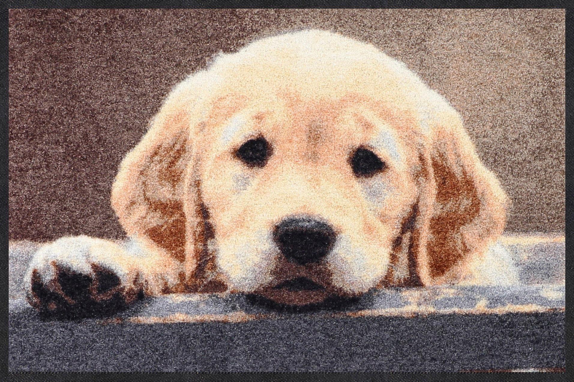 Fußmatte »Nosy Dog«, Salonloewe, rechteckig, Höhe 7 mm