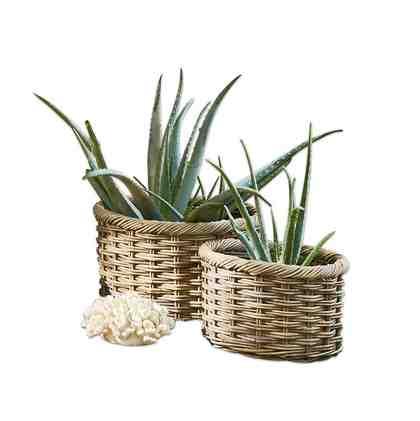 pflanzen im schlafzimmer tipps f r schlafzimmerpflanzen. Black Bedroom Furniture Sets. Home Design Ideas