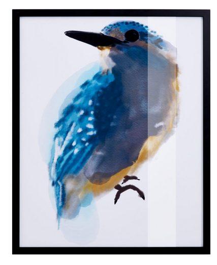Guido Maria Kretschmer Home&Living Bild »Eisvogel«, mit schwarzem Rahmen