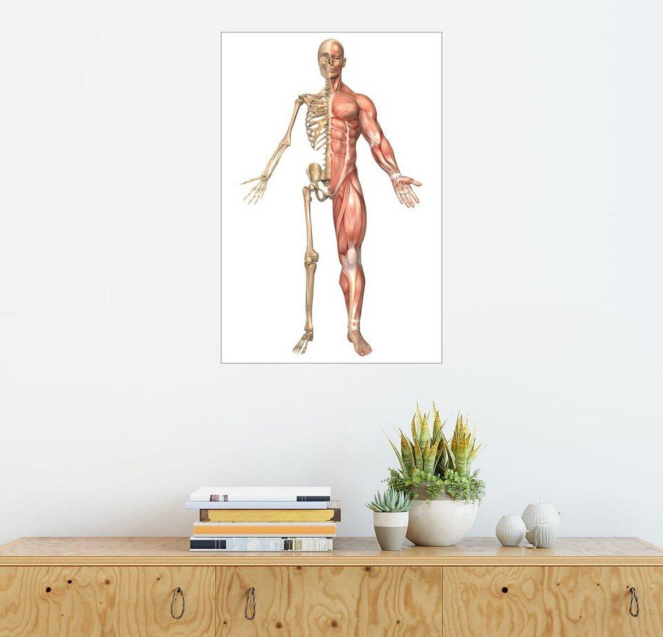 Posterlounge Wandbild - Stocktrek Images »Das menschliche Skelett ...