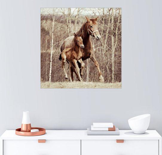 Posterlounge Wandbild »Fohlen mit seiner Mutter auf der Wiese«