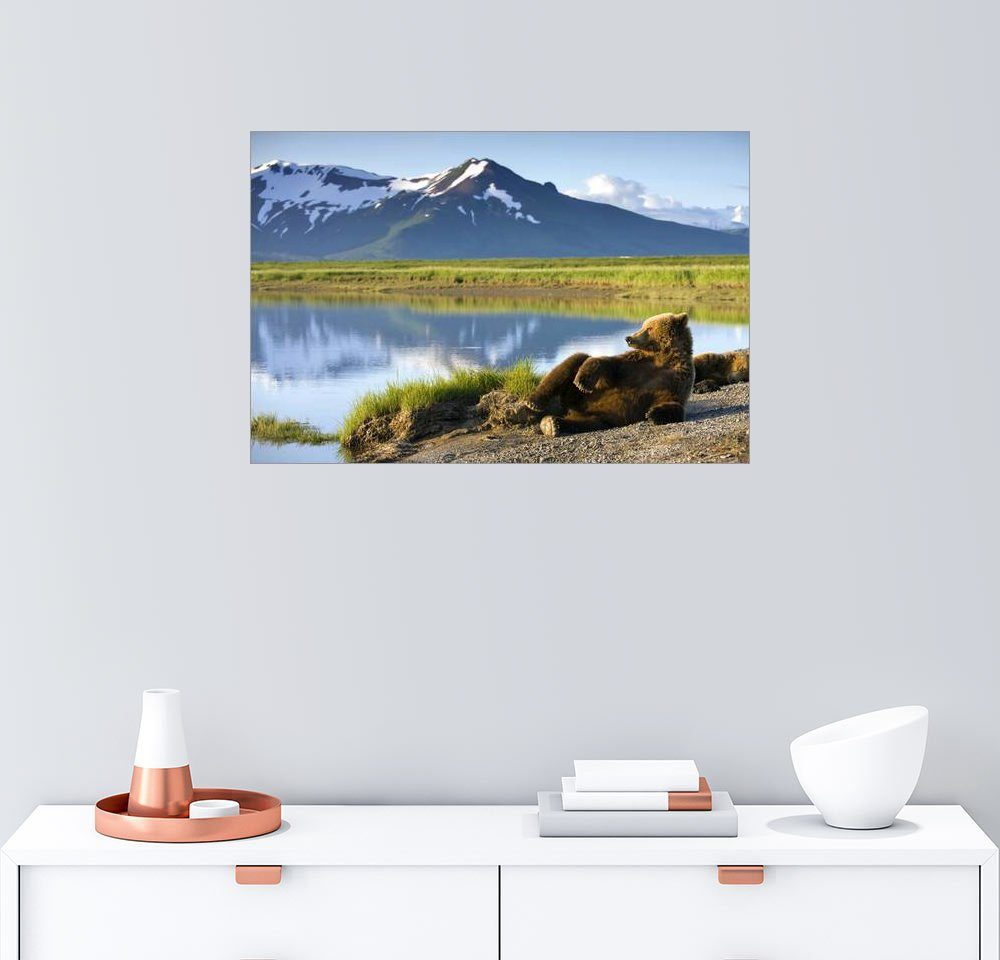 Posterlounge Wandbild - Paul Souders »Braunbär entspannt am See«