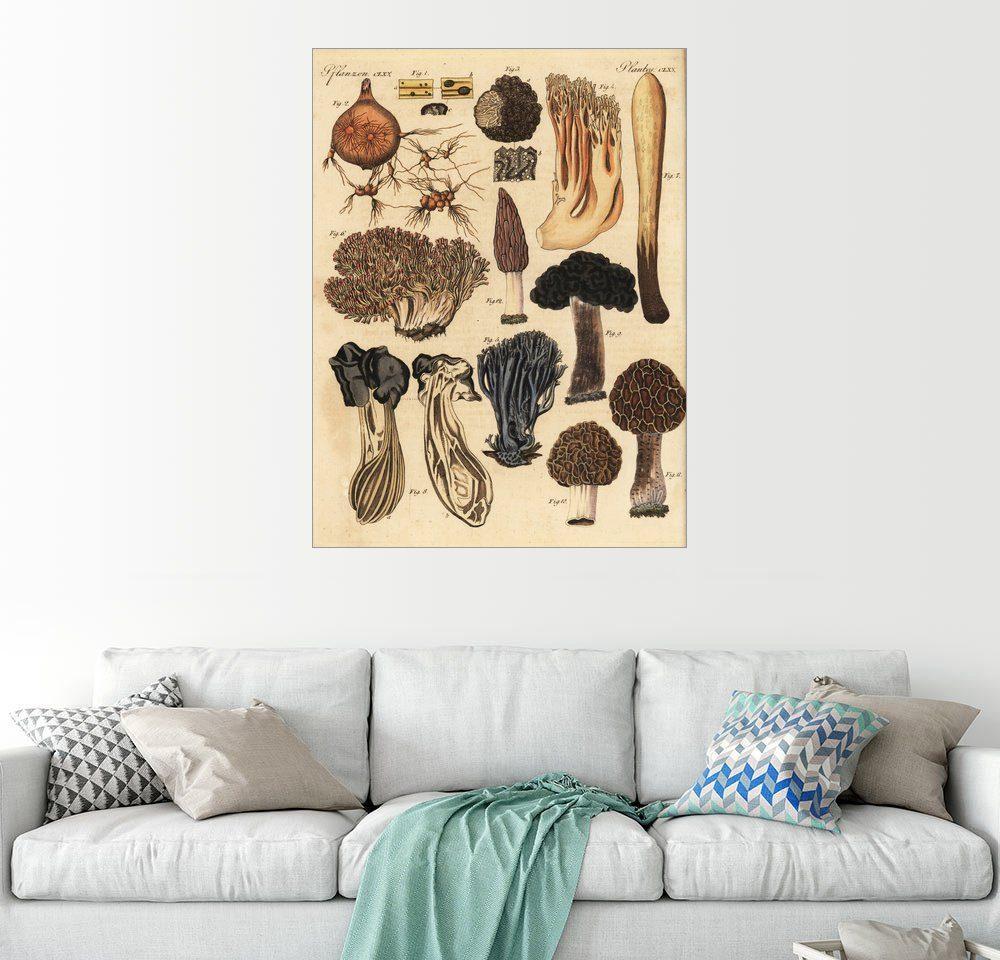 Posterlounge Wandbild »Trüffel, Morcheln und Korallenpilze«