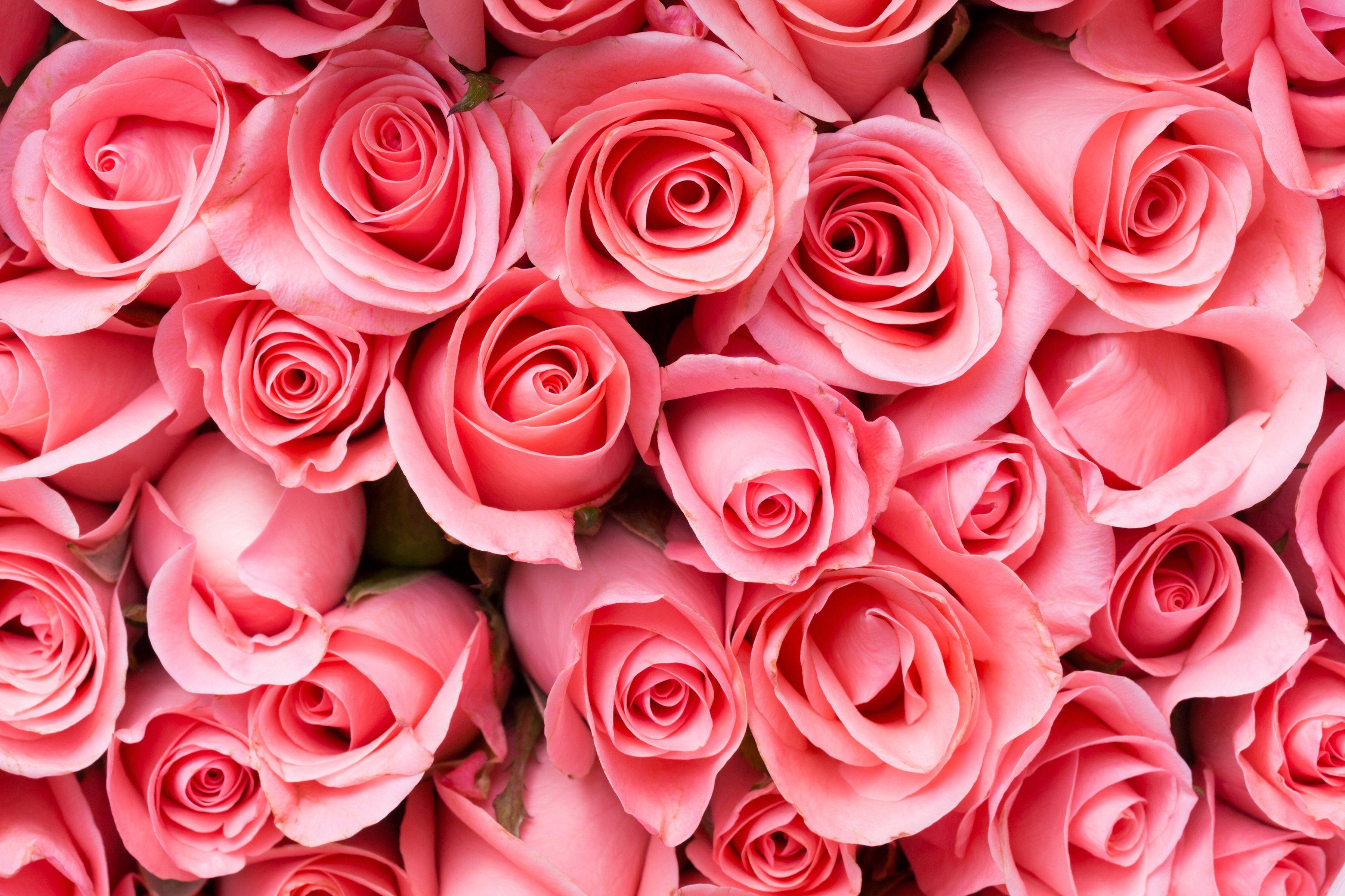 PAPERMOON Fototapete »Pink Rose Flowers«, BlueBack, 7 Bahnen, 350 x 260 cm