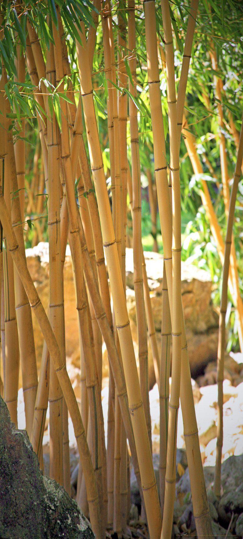 PAPERMOON Fototapete »Bamboo - Türtapete«, BlueBack, 2 Bahnen, 90 x 200 cm