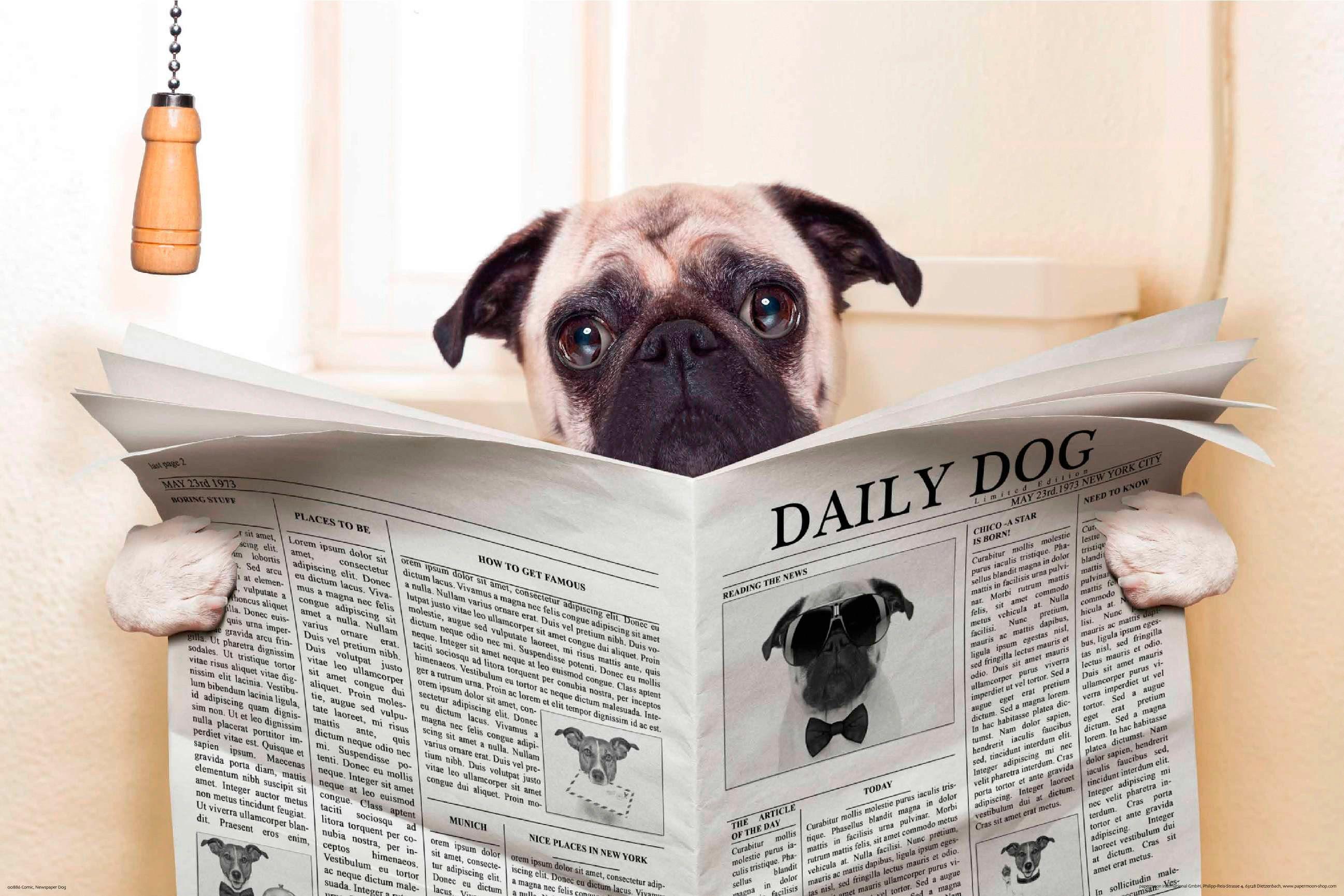 PAPERMOON Fototapete »Newspaper Dog«, BlueBack, 7 Bahnen, 350 x 260 cm