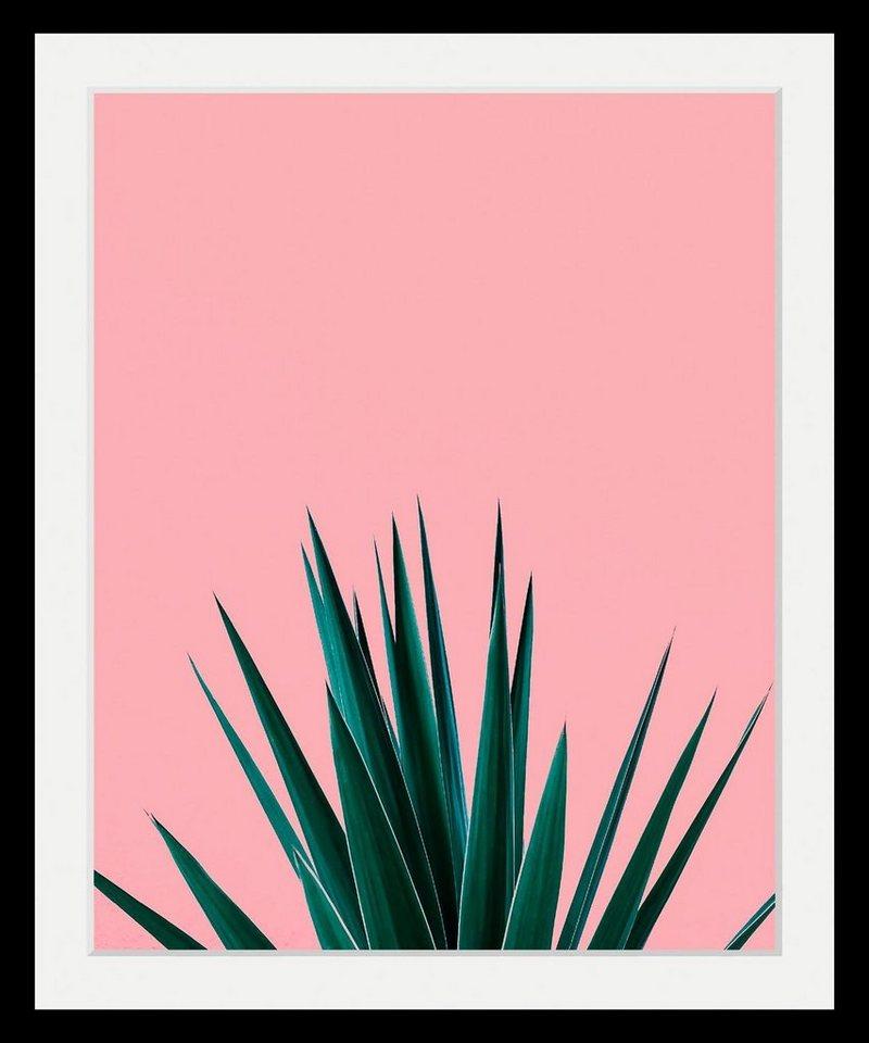 Bild mit Rahmen »Pflanze« in 3 Größen kaufen | OTTO