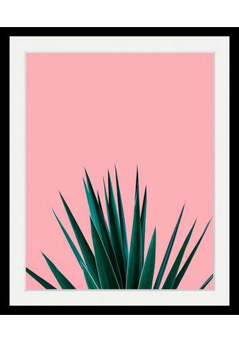 Paveikslas »Pflanze«