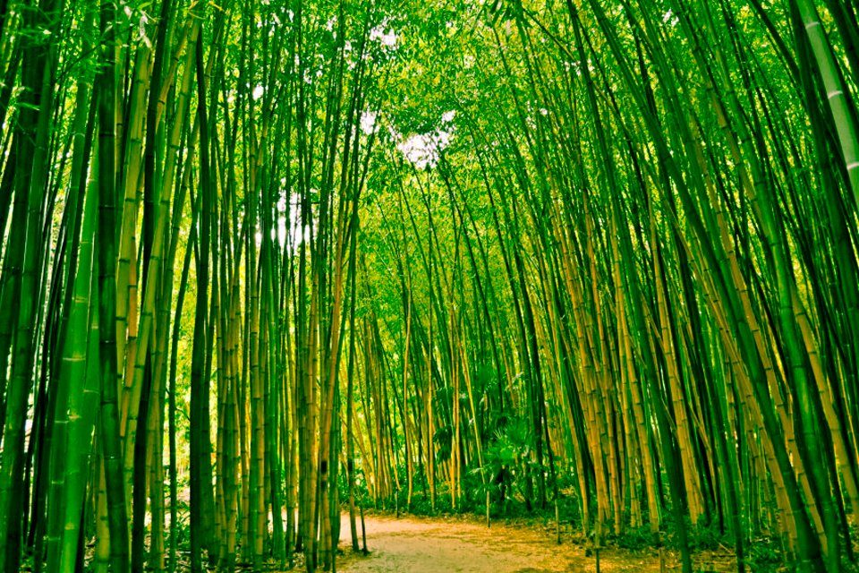 PAPERMOON Fototapete »Bamboo Forest«, Vlies, 7 Bahnen, 350 x 260 cm