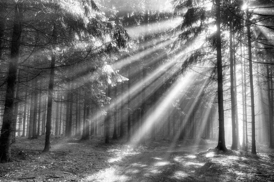PAPERMOON Fototapete »Wood Glade«, Vlies, 7 Bahnen, 350 x 260 cm