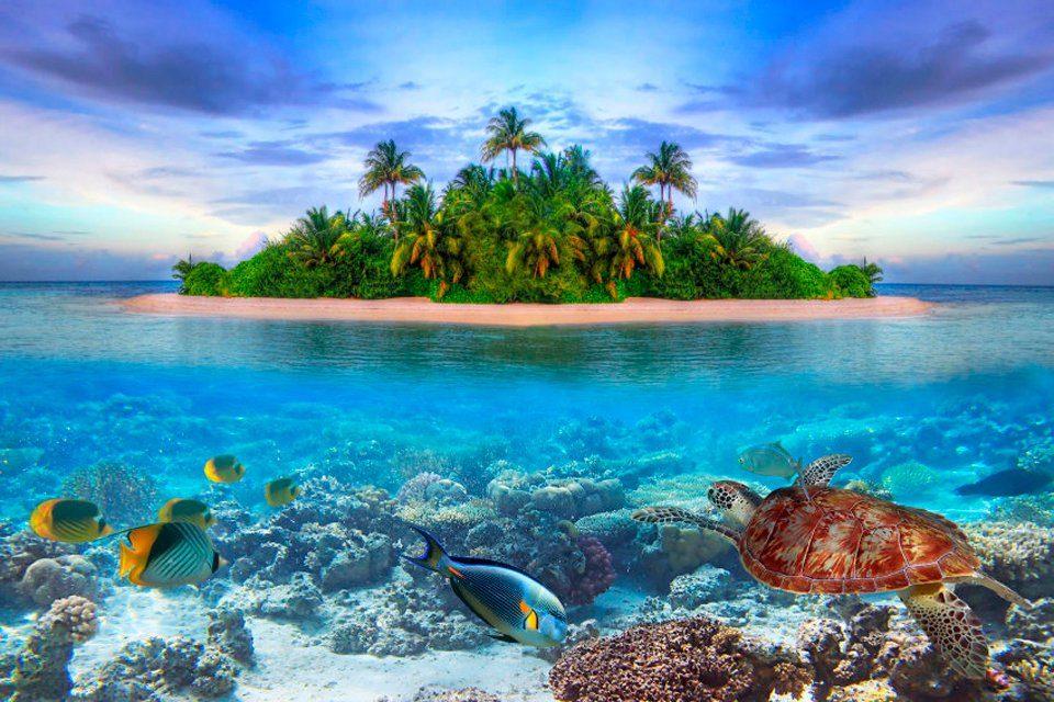 PAPERMOON Fototapete »Marine Life Maldives«, Vlies, 5 Bahnen, 250 x 180 cm