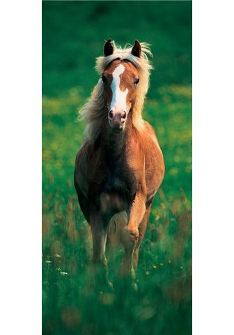 PAPERMOON Fototapetas »Haflinger Horse - Türtape...