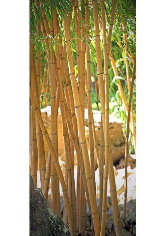 PAPERMOON Fototapetas »Bamboo - Türtapete« Vlies...