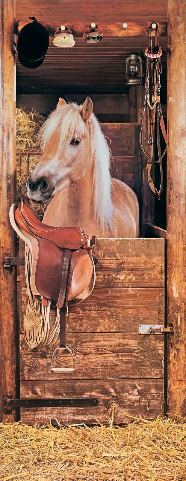 PAPERMOON Fototapete »Horse in Stable - Türtapete«, Vlies, 2 Bahnen, 90 x 200 cm