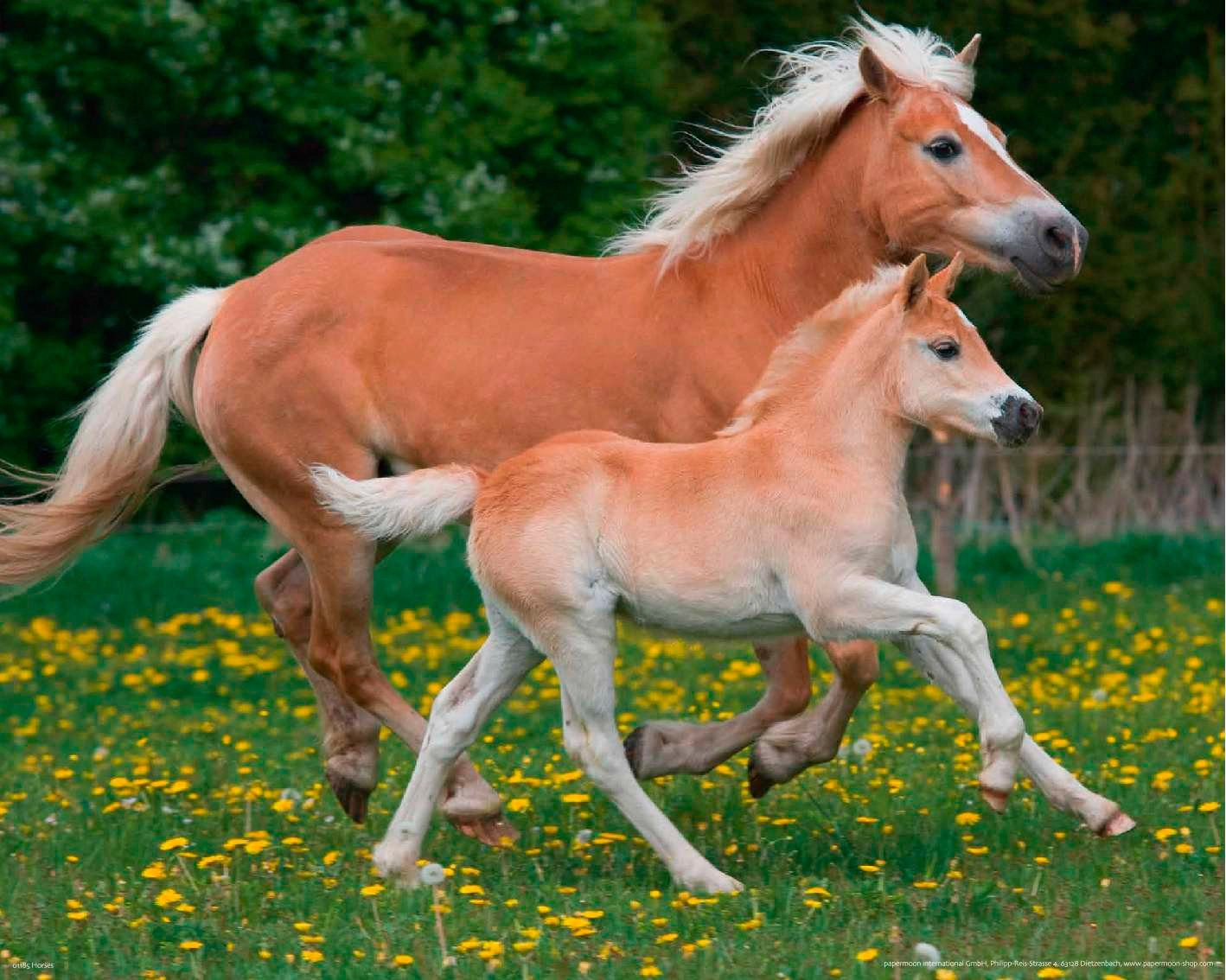 PAPERMOON Fototapete »Horses«, Vlies, 7 Bahnen, 350 x 260 cm