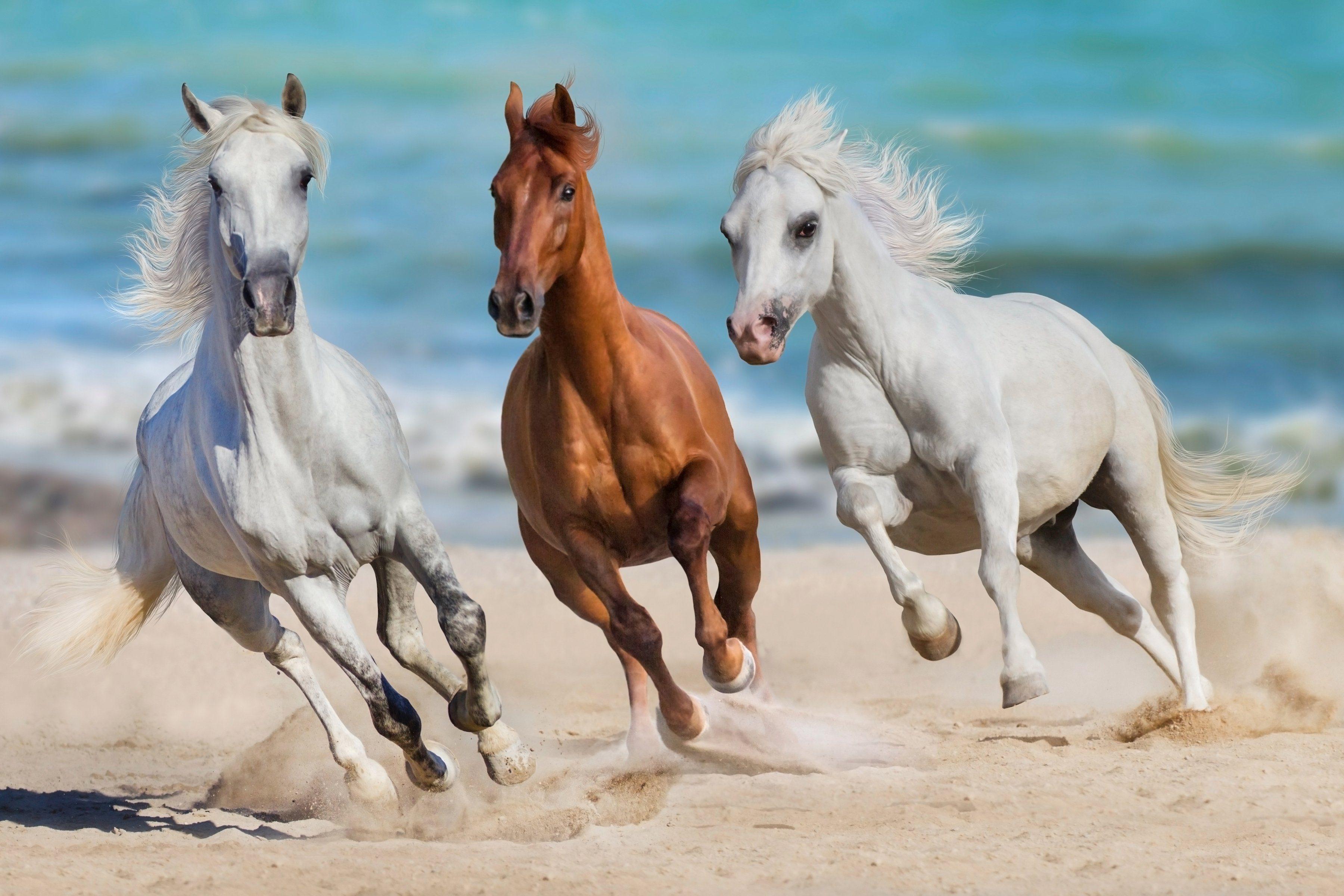 PAPERMOON Fototapete »Horse Herd Run Gallop«, Vlies, 7 Bahnen, 350 x 260 cm