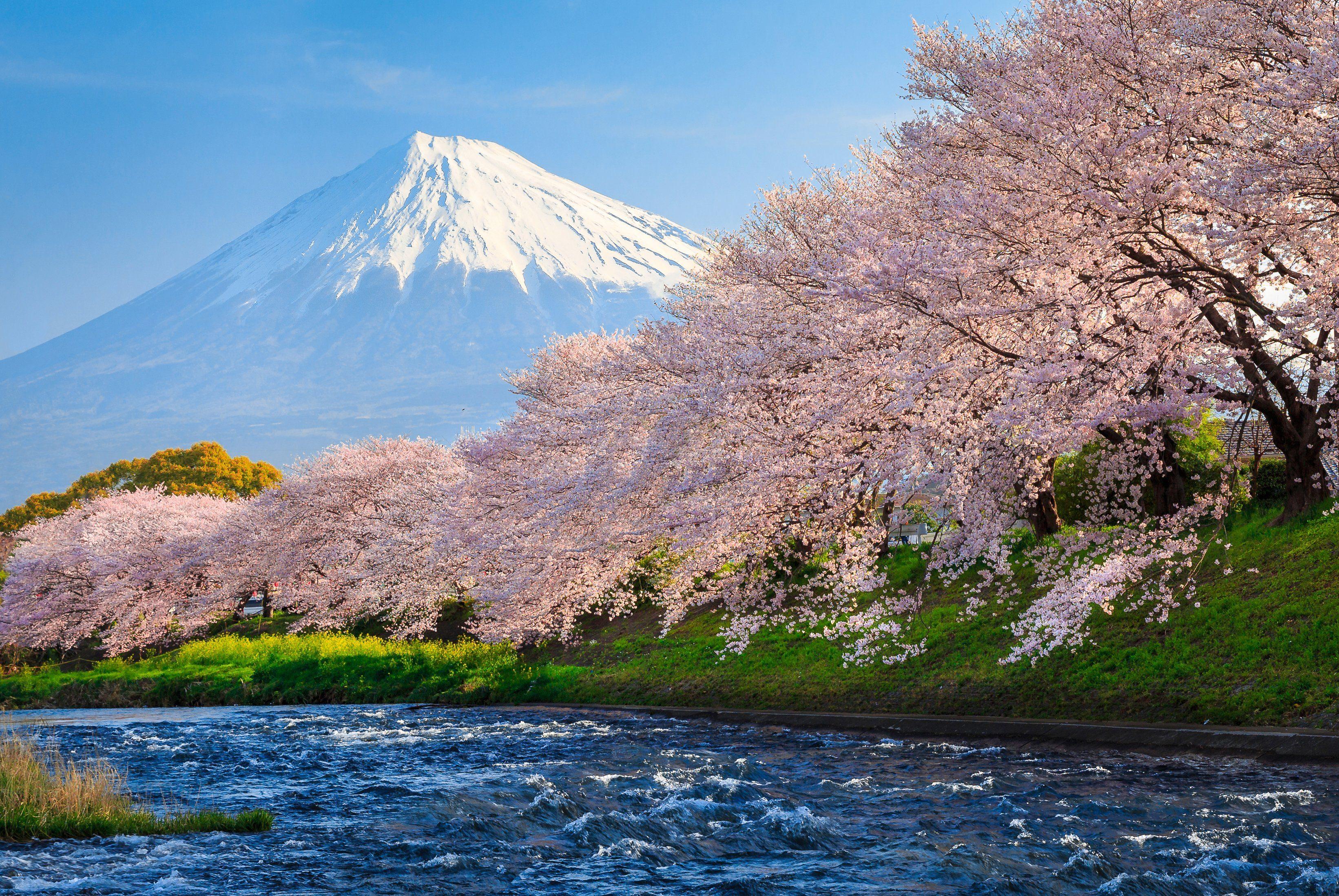 PAPERMOON Fototapete »Fuji and Sakura«, BlueBack, 7 Bahnen, 350 x 260 cm