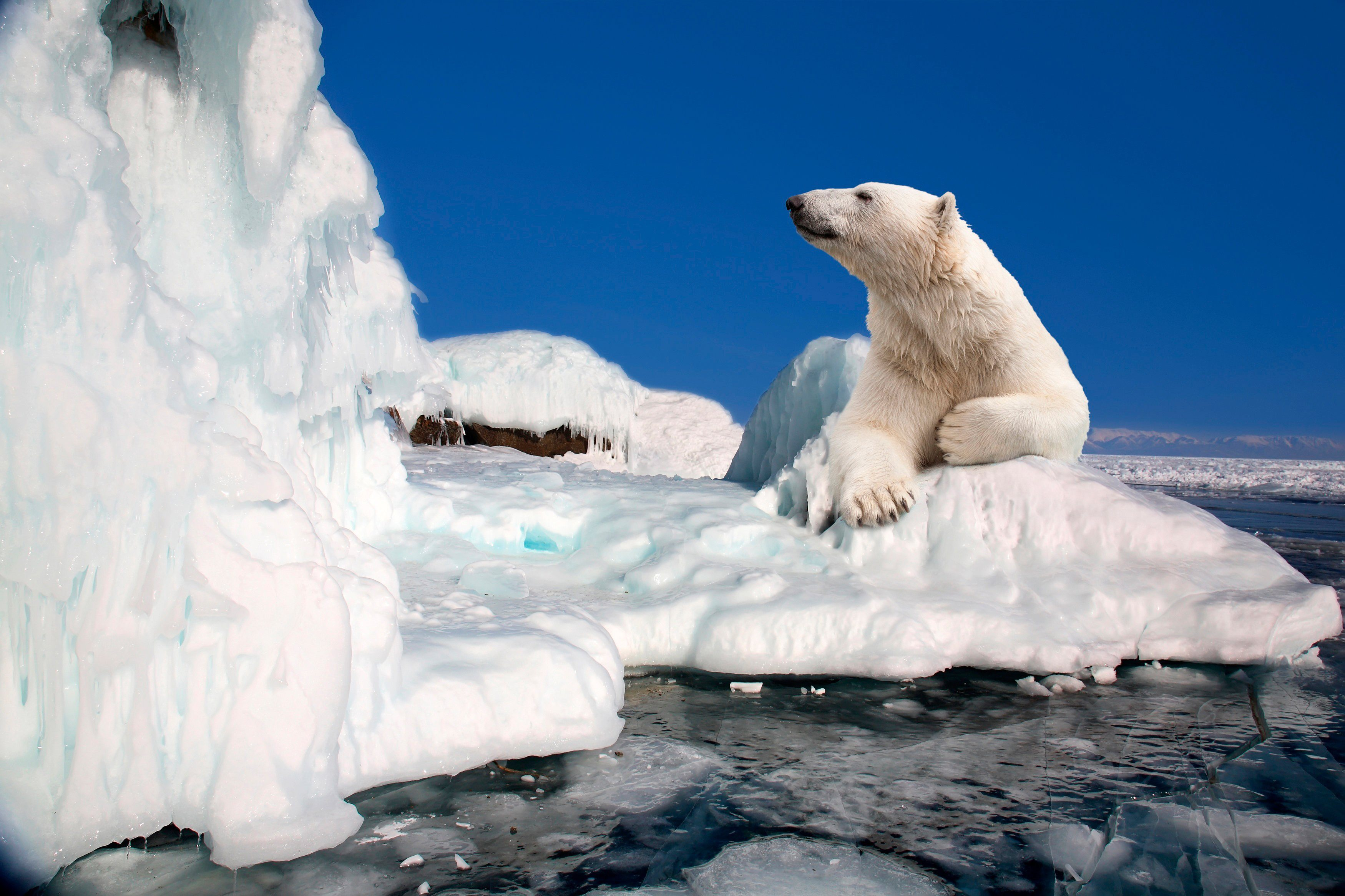 PAPERMOON Fototapete »Polar Bear«, BlueBack, 7 Bahnen, 350 x 260 cm