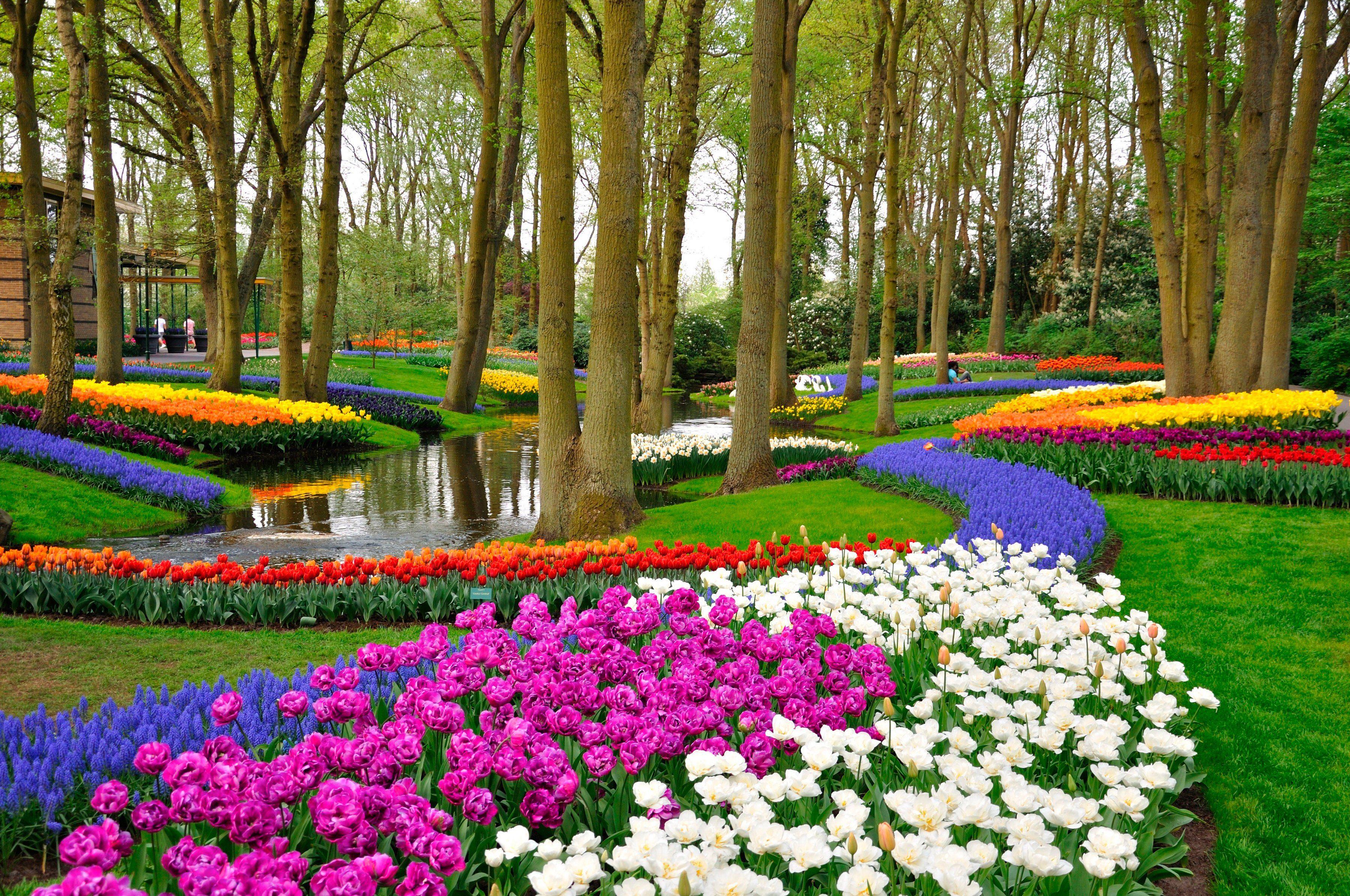 PAPERMOON Fototapete »Tulips in Keukenhof Park«, BlueBack, 7 Bahnen, 350 x 260 cm