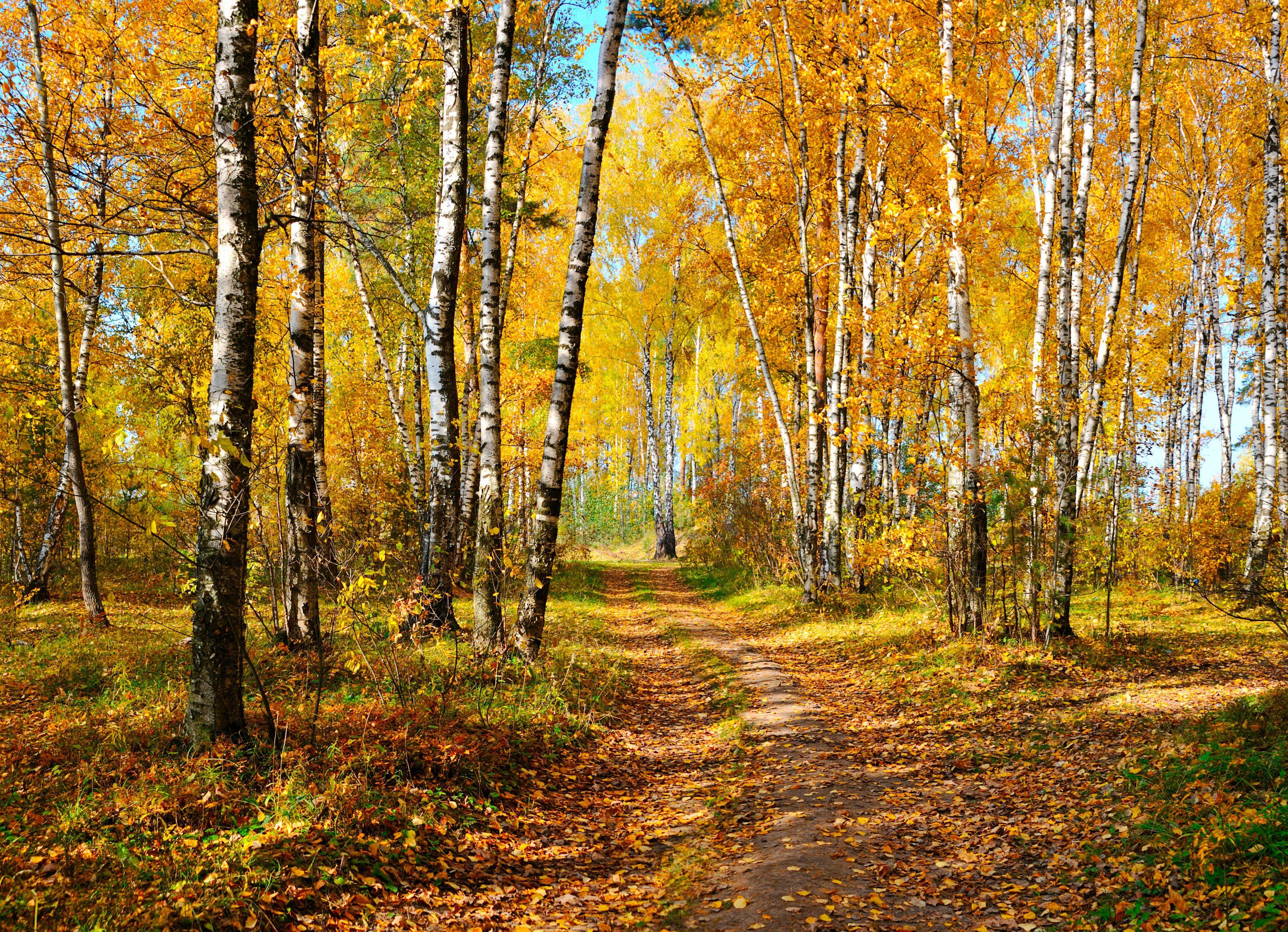 PAPERMOON Fototapete »Autumn Forest«, BlueBack, 7 Bahnen, 350 x 260 cm