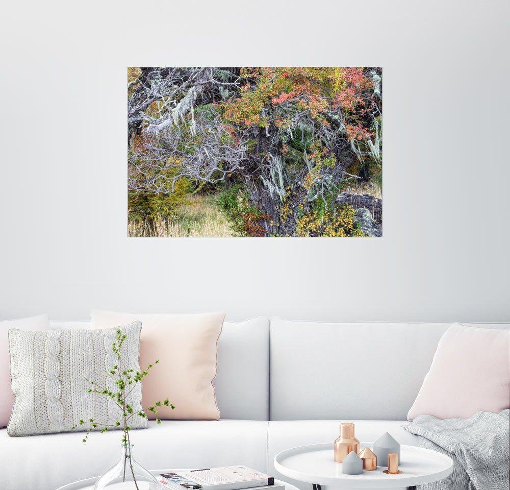 Posterlounge Wandbild - Circumnavigation »Südbuche in Herbstfarben, Patagonien, Argenti...«