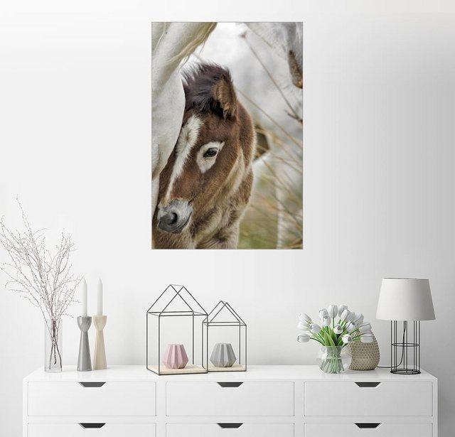 Posterlounge Wandbild - Adam Jones »Camargue Pferdefohlen, Südfrankreich« | Dekoration > Bilder und Rahmen > Bilder | Bunt | Posterlounge