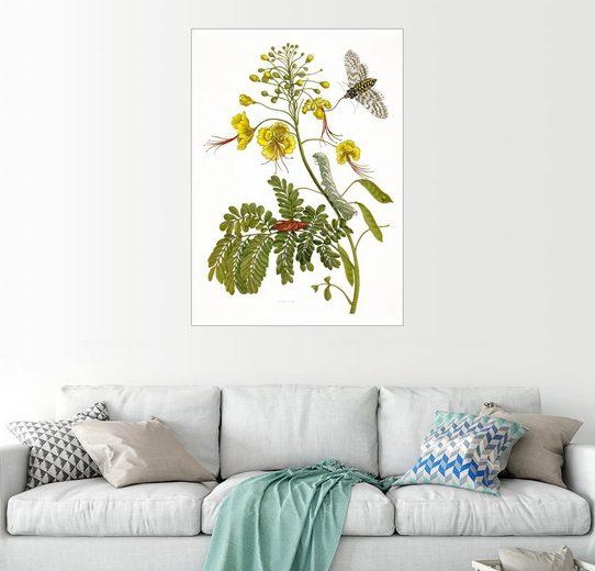 Posterlounge Wandbild - Maria Sibylla Merian »Eine Motte und eine Raupe«