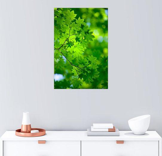 Posterlounge Wandbild »Frisches Grün im Frühjahr«