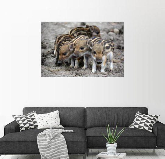 Posterlounge Wandbild - GUGIGEI »Wildschwein Frischlinge«