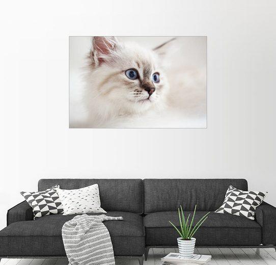 Posterlounge Wandbild »Schönes Katzengesicht«