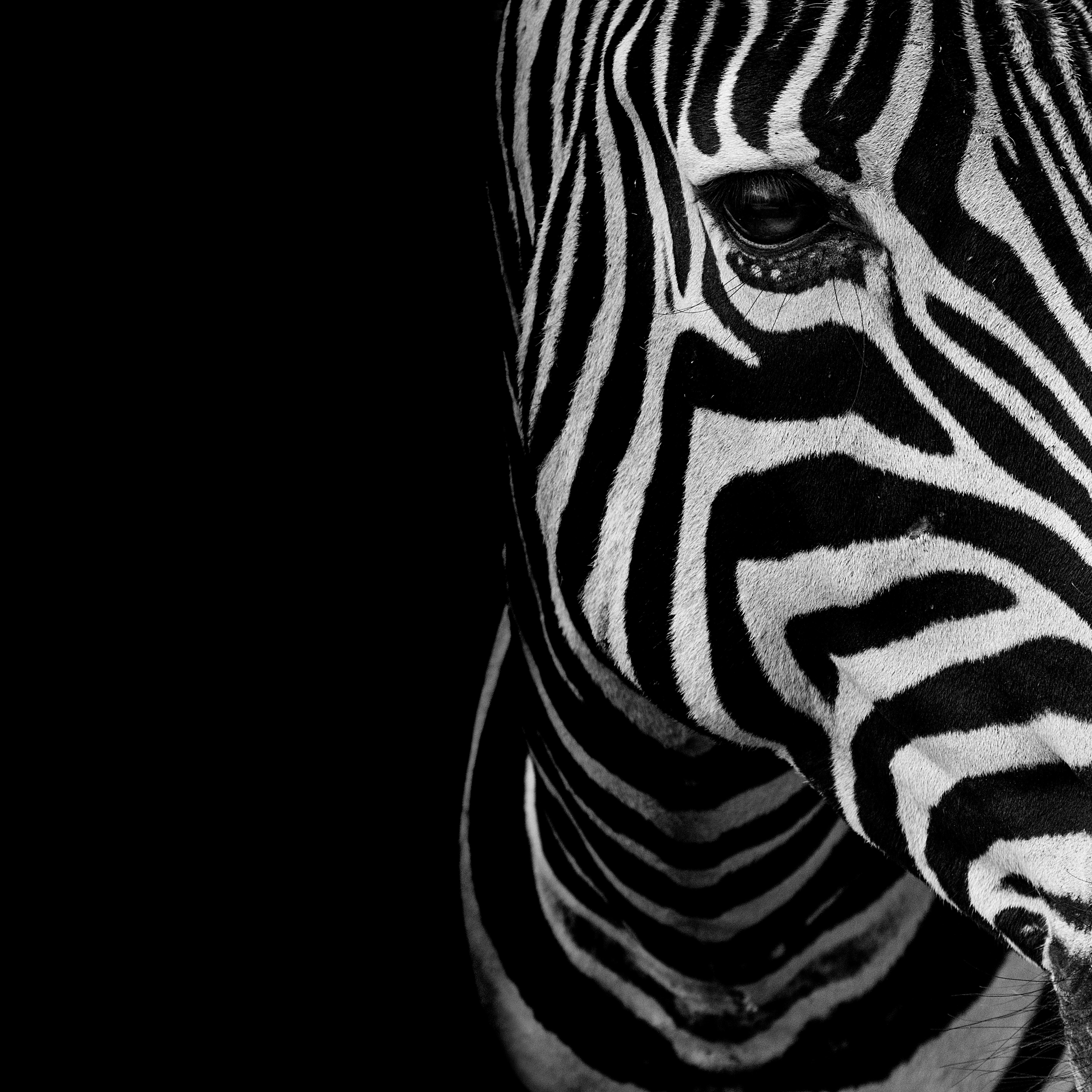 Home affaire Deco Panel »Zebra Auge« 50/50cm
