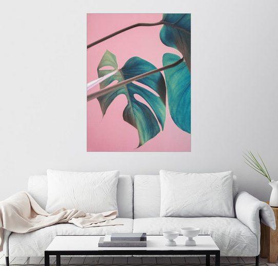 Posterlounge Wandbild - Emanuela Carratoni »Sweet pink monstera leaves«