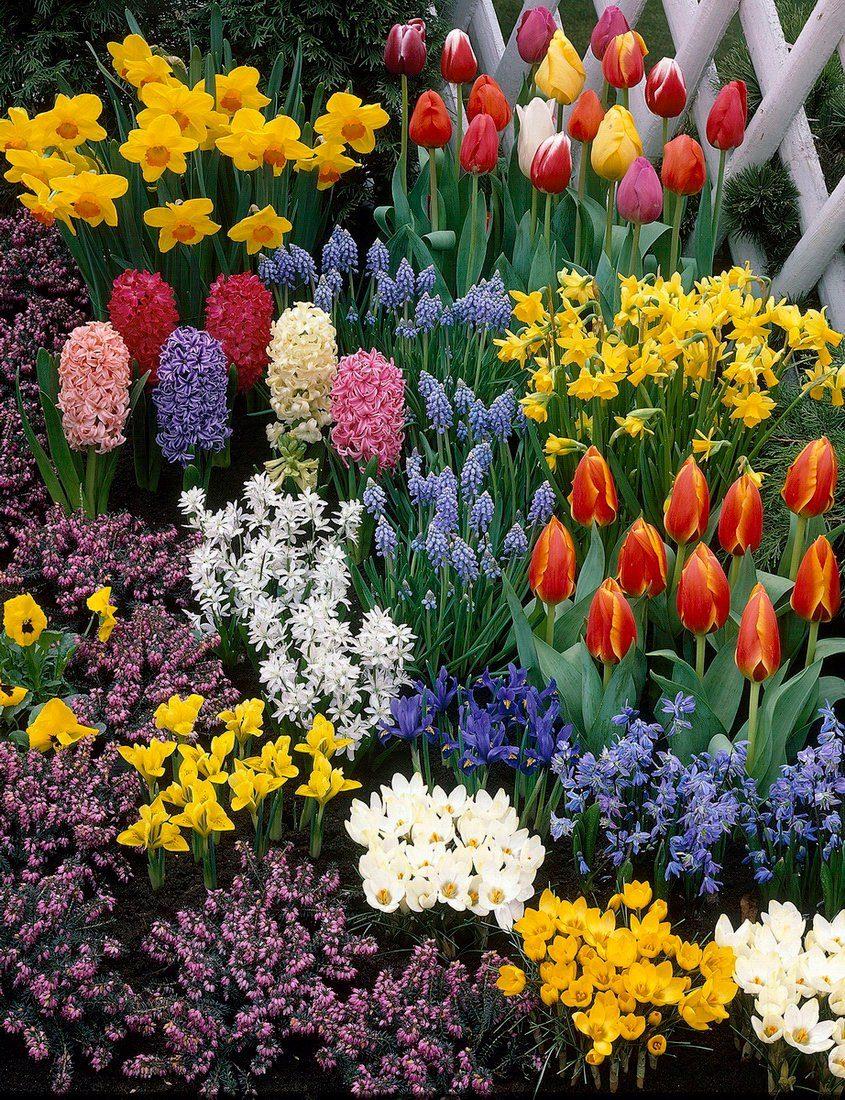 Blumenzwiebel , 280 Stück, 7 Sorten-Mix