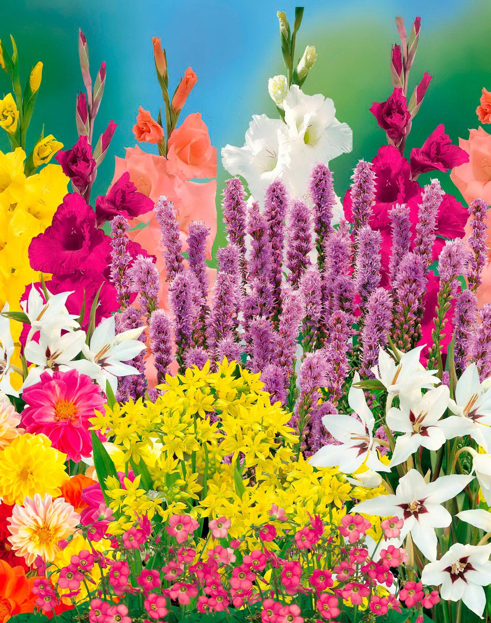 Blumenzwiebel , 95 Stück, 5 Sorten
