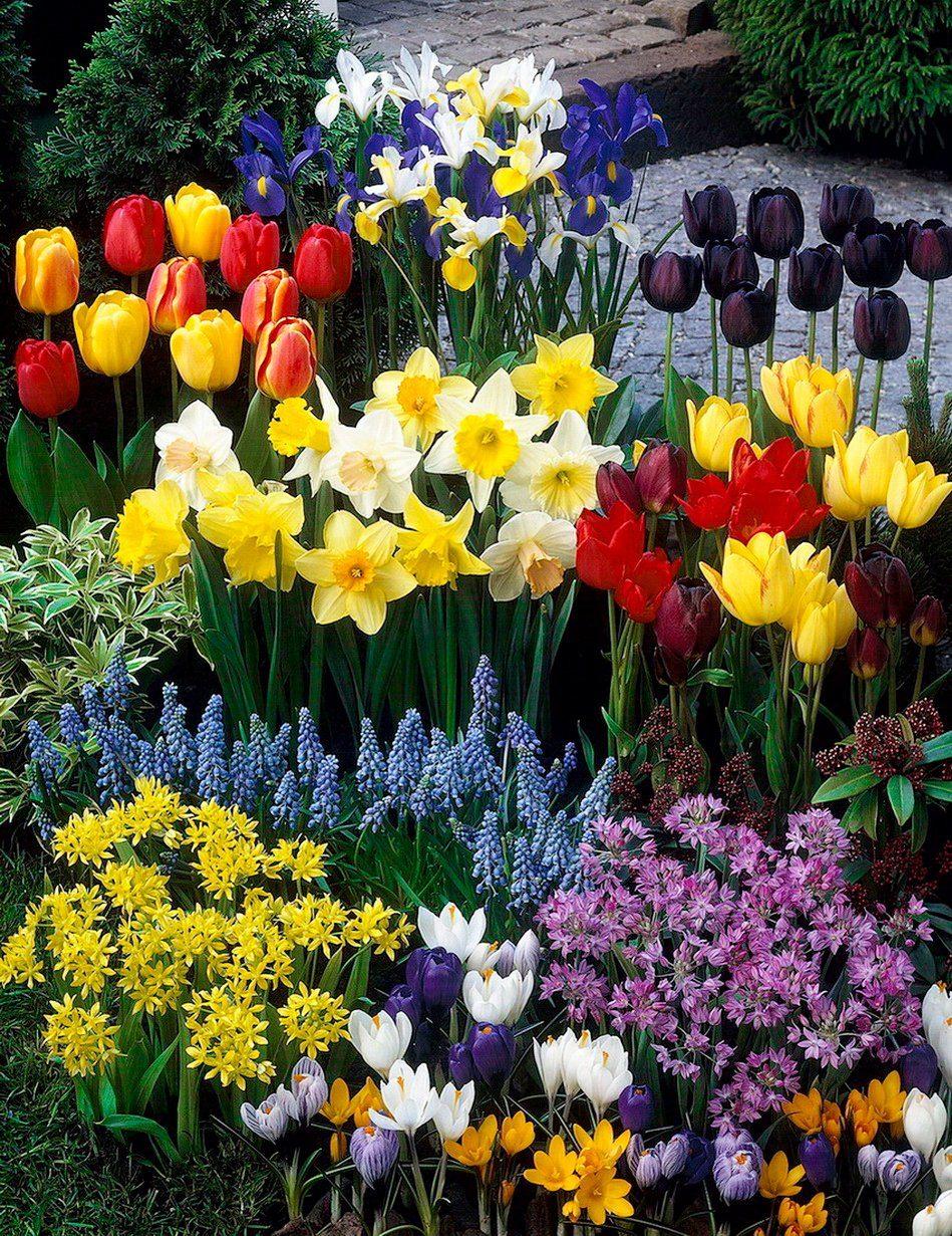 Blumenzwiebel , 204 Stück, Mix aus bunten Farben