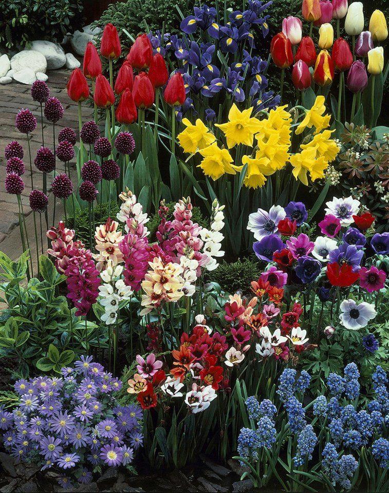 Blumenzwiebel , 236 Stück, 6 Sorten-Mix