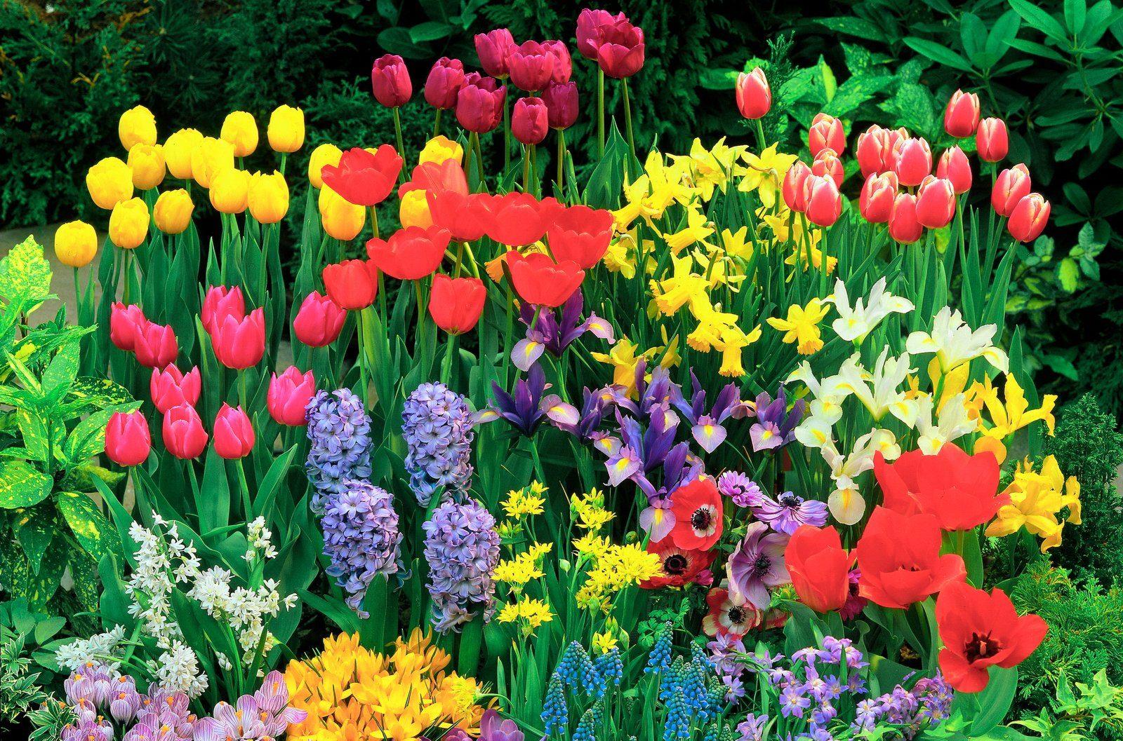 Blumenzwiebel , 340 Stück, 6 Sorten-Mix