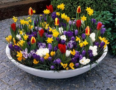 Blumenzwiebel , 134 Stück, Frühjahrsblüher-Sortiment