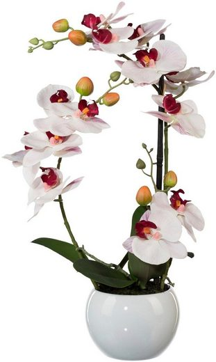 Kunstpflanze »Phalaenopsis« Orchidee, Creativ green, Höhe 42 cm