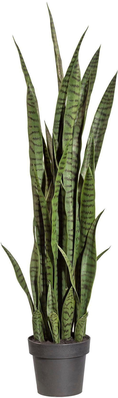 Künstliche Zimmerpflanze »Sanseveria« x39 Bl., ca. 120 cm