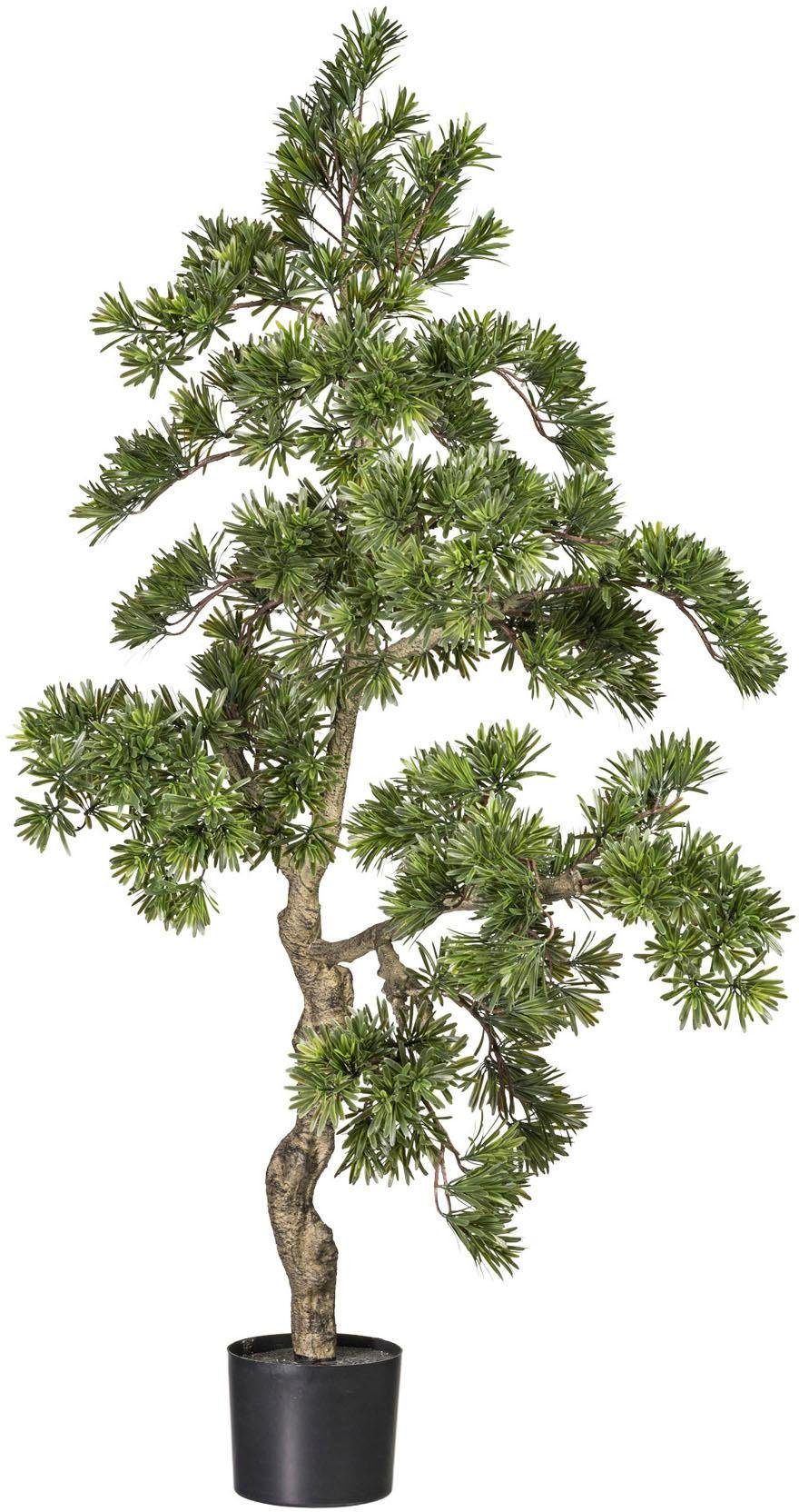 Kunstbaum »Podocarpus« baum, ca. 150 cm