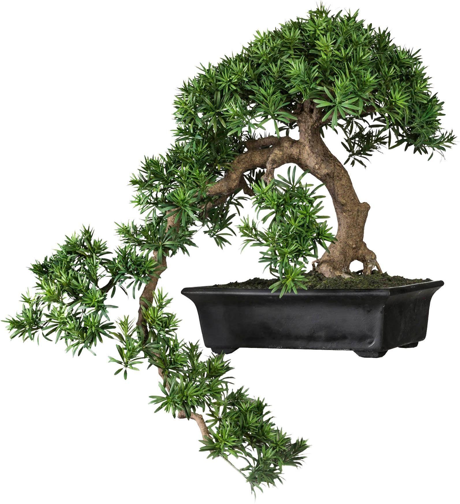 Kunstbonsai »Bonsai Podocarpus« Kengai
