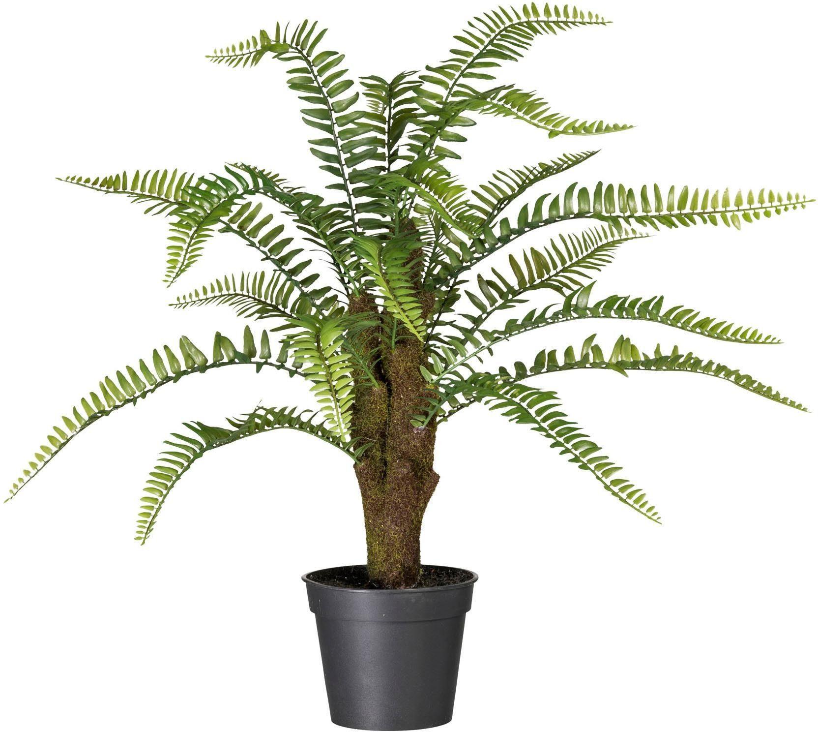 Künstliche Zimmerpflanze »Nephrolepis« x20, ca. 60 cm