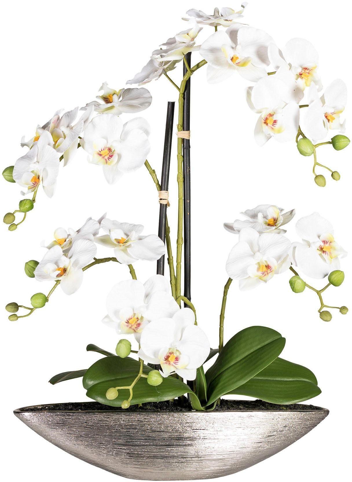 Kunstorchidee »Phalaenopsis« x5, creme, ca. 55 cm